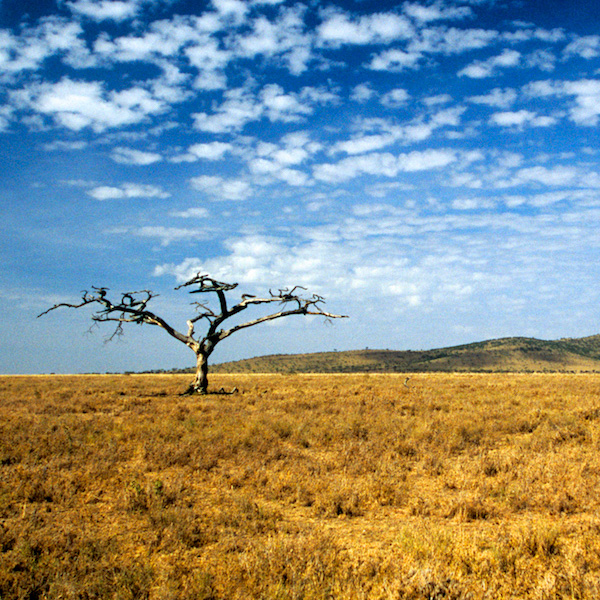 African Scenics by David Cayless