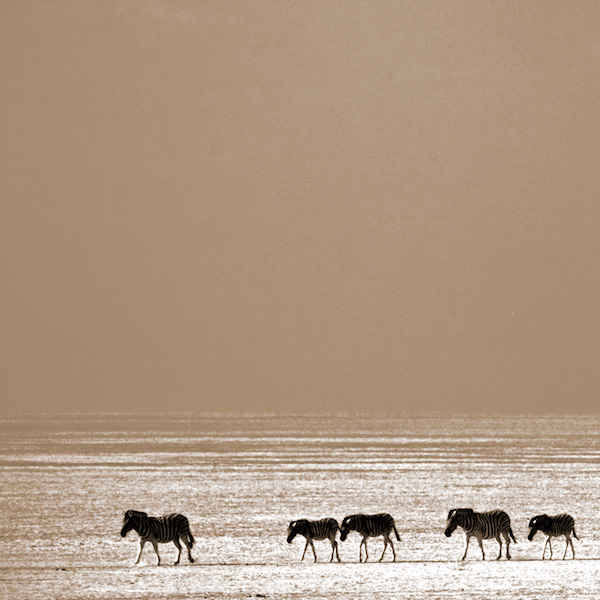 African Wildlife by David Cayless